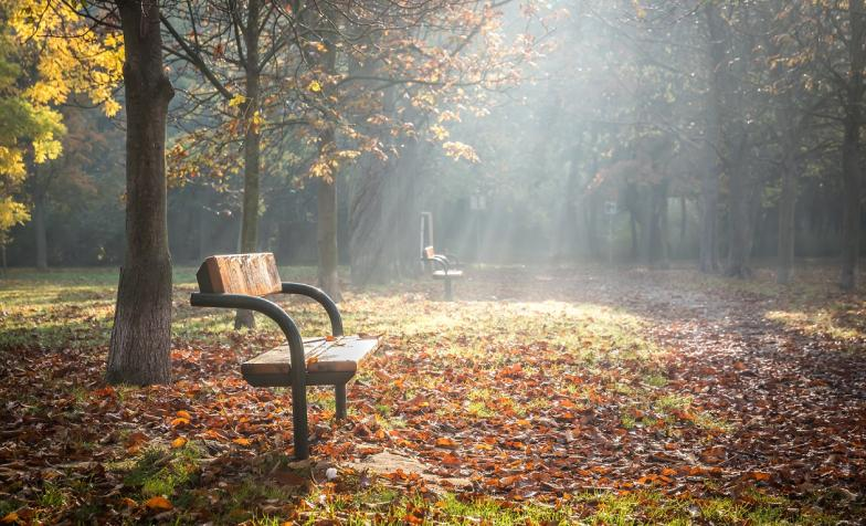 Picture of a bench in a forest with sunlight streaming through