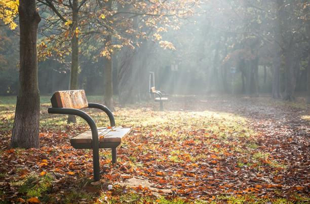 An image of a bench in an autumnal wood